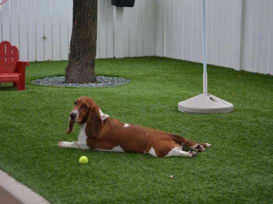 Artificial Grass Photos: Grass Carpet Bystrom, California Grass For Dogs,  Dog Kennels