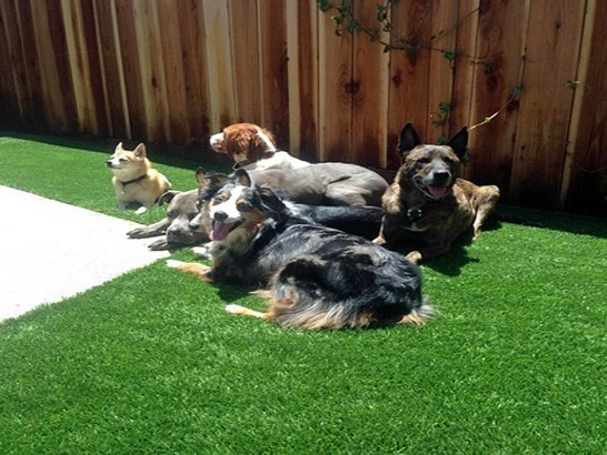 Artificial Grass Photos: Synthetic Lawn Oakdale, California Fake Grass For Dogs, Backyard Landscaping Ideas