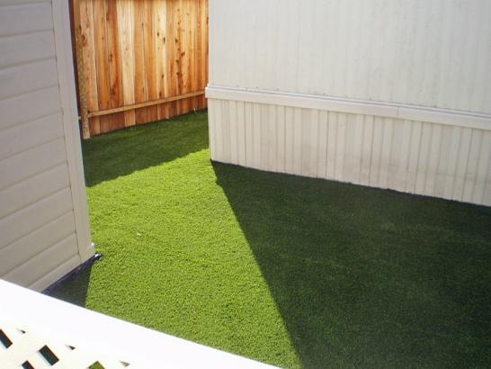 Artificial Grass Photos: Synthetic Turf Shackelford, California Pictures Of Dogs, Backyard Landscaping Ideas