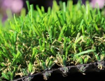 Natural Looking Synthetic Turf